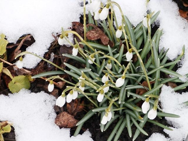Gartenjahr Januar